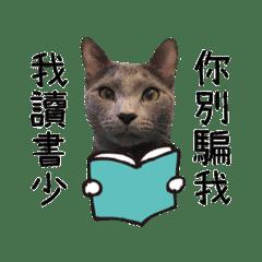 看透一切的藍貓MIU MIU
