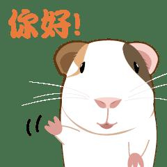 天竺鼠阿Sun