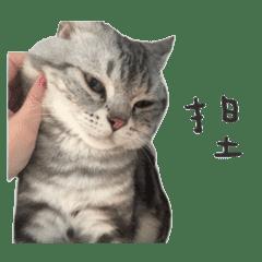 Kimi是大哥(字幕版)