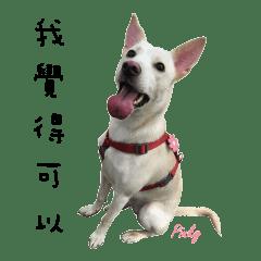 Dog pinky