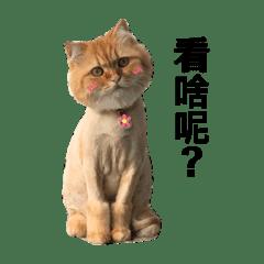 HuGu-橘貓
