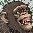Chimpanzee!