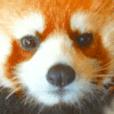 実写動物のスタンプ
