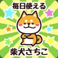 Petit Shiba Sachiko (Everyday)