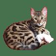 ベンガル猫 エディのスタンプ