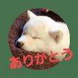 manatsumikan_20190127001037
