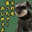ハローチョコ【江戸っ子編】