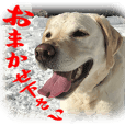 Sticker of Labrador Retriever Victor 2