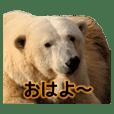 Cute Real Bear