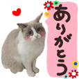 cat sticker photo fukidashi