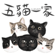 5catsdaily / common expressions