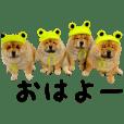 Askhome_20190209090659