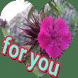 Bahare . Flower