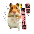 Hamster club for you