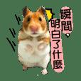 鼠寶發電廠~五味雜陳篇