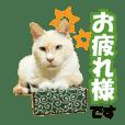 HOKKAIDOしっぽの会 犬猫スタンプ3