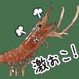 (Animation)Shrimp
