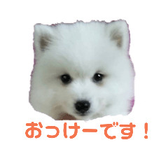 Taka_20190208150256