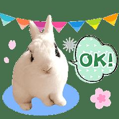 傲嬌少爺-萬兔