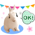 cute little rabbit ONE 2