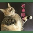 Happy Heavy Cat