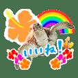 沖縄の海ガメとクマノミ達