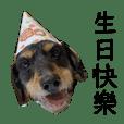 餃狗狗噗醬
