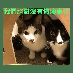 桐花子(大頭)feat.小葵子(VuVu)