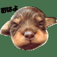 福ちゃんのツンデレ365日