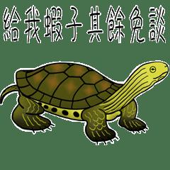 小龜的日常生活