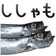Capelin is Shishamo