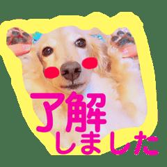 バディーの日常( U ・ᴥ・)