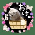 【激かわ♡】もふねこミルク3 ダジャレ編