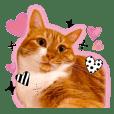茶トラ猫 「小麦ちゃん」