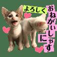 保護猫ちこ&そーbyオハナビーズ