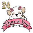 Shih Tzu dog (with a ribbon)vol.24