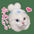 白猫タマの日常2