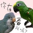 種子人與鸚鵡們有話要說2