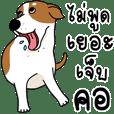 funny dog hayha 2