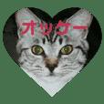 ネコちゃんたち集合2