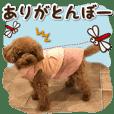 可爱·狗⑧有趣的评论