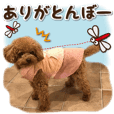 Lucu · anjing ⑧ Komentar lucu