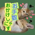 キトンMix byオハナビーズ