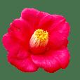 Flower stamp510