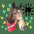 馬のスタンプ(キョウワダッフィー)