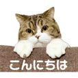mamesuke_cat_stamp