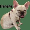 Frechbulldog-soysauce