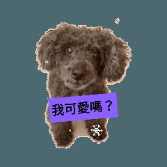 mydog_20190228031716