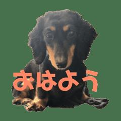 愛犬くろちゃん