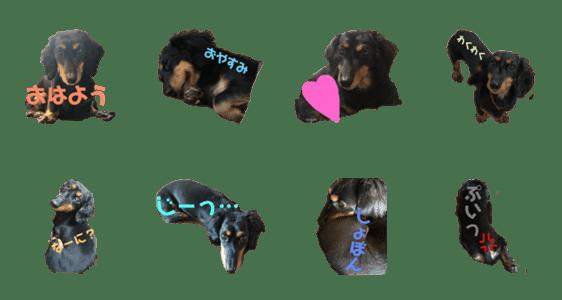 「愛犬くろちゃん」のLINEスタンプ一覧
